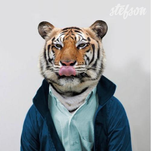stefson